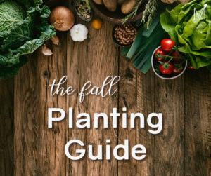Fall Planting Blog