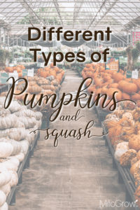 Different Types of Pumpkins