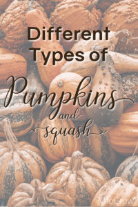 Types of Pumpkins
