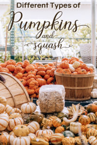 Types of Pumpkins and Squashes