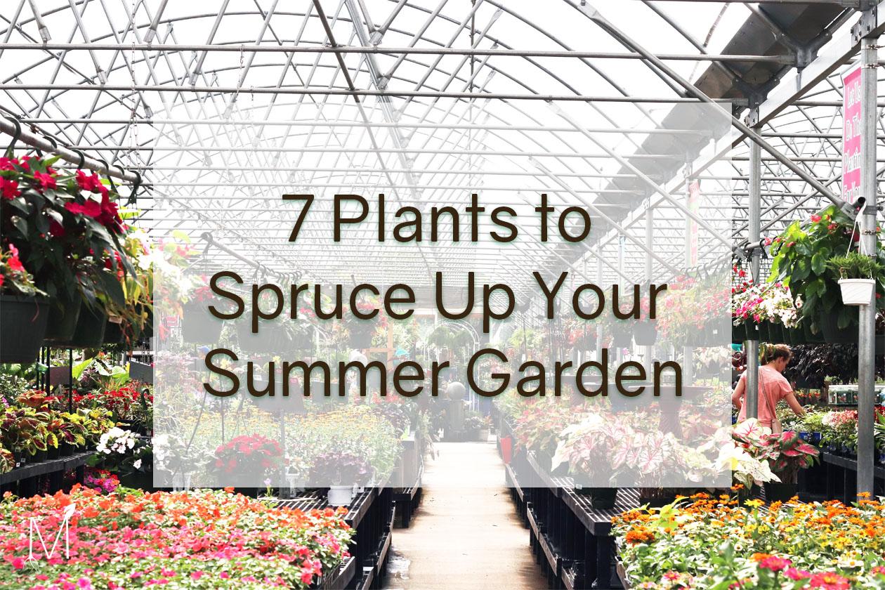 Summer Garden Plants