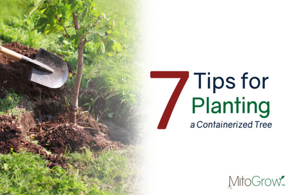 Tips for Planting