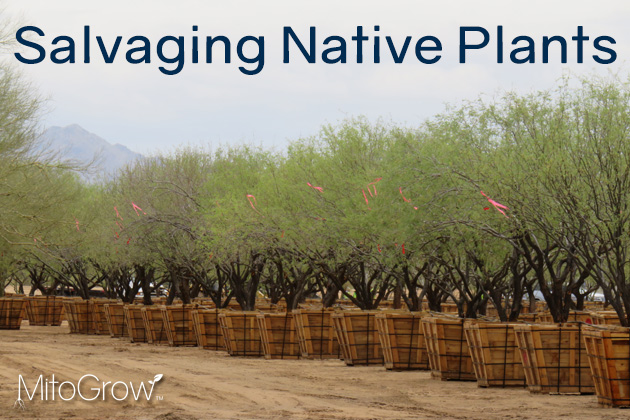 Salvaging Native Plants