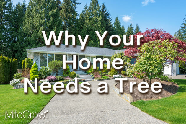 Home Needs a Tree