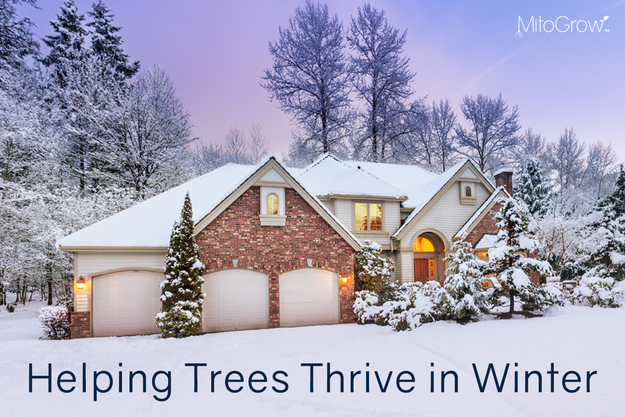 Helping Trees Thrive in Winter