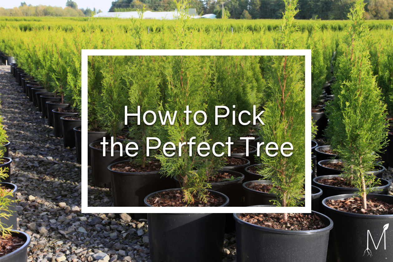 Perfect Tree - Blog