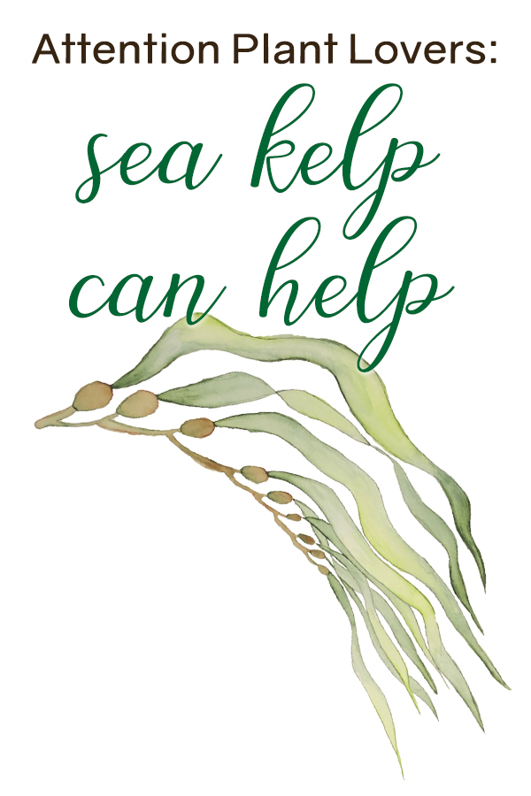 Sea Kelp Can Help