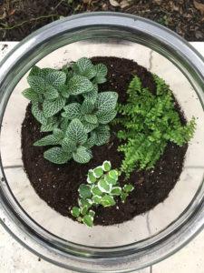 terrarium plant layer