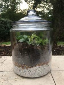 finished terrarium