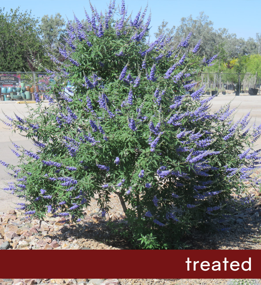 vitex-treated