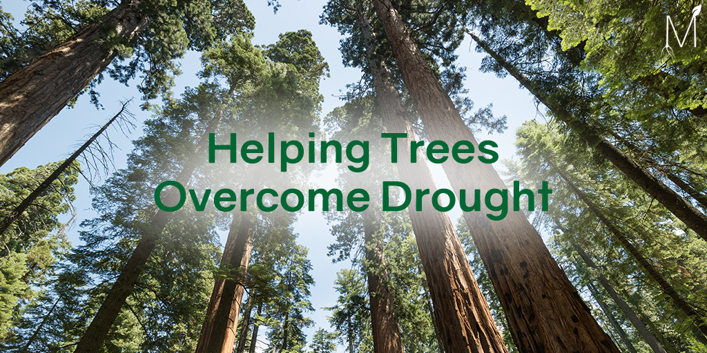 Help Trees Overcome Drought