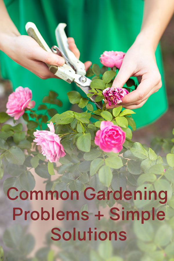 Common Gardening Problems + Simple Solutions