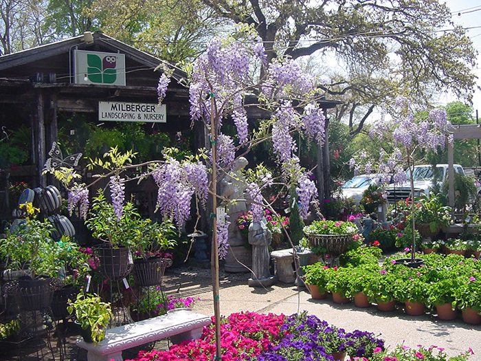 Five Amazing San Antonio Nurseries